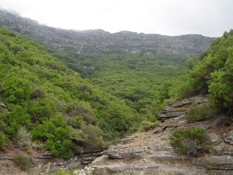 Για το περιβαλλοντοκτόνο νομοσχέδιο του υπουργείου Περιβάλλοντος  «Εκσυγχρονισμός Περιβαλλοντικής Νομοθεσίας»